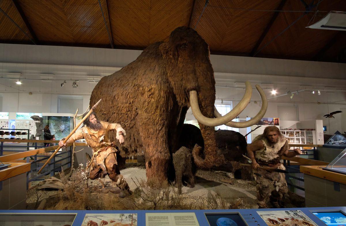 Mamut és kicsinye neandervölgyi vadászokkal a Magyar Természettudományi Múzeum kiállításán Fotó: MTVA Nagy Zoltán